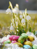 Some snowdrops chocolate eggs snow. Some snowdrops with chocolate eggs on snow Stock Photos