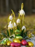 Some snowdrops chocolate eggs snow. Some snowdrops with chocolate eggs on snow Stock Photography