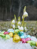 Some snowdrops chocolate eggs snow. Some snowdrops with chocolate eggs on snow Royalty Free Stock Photography