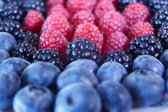 Some sort of. Berries: blueberries, blackberries, raspberries Stock Image