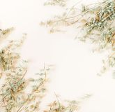 Some spikelets of oats on the pale beige background. Pastel colors background.top view. copy space stock image