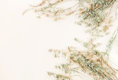 Some spikelets of oats on the pale beige background. Pastel colors background.top view. copy space stock photography