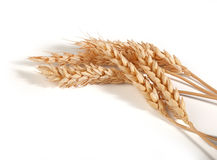 Some spikelets of wheat Stock Photos