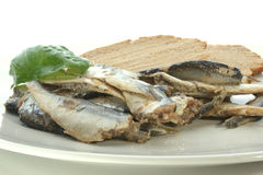 Some sprats and bread on a plate. Some sprats and bread on a white plate stock image