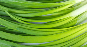 Some spring onion. Close-up Stock Image
