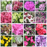 Some spring and summer flowers. Spring and summer flowers collection royalty free stock image