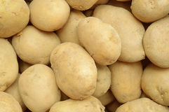 Some stacked potatoes after the crop. Top view Royalty Free Stock Images