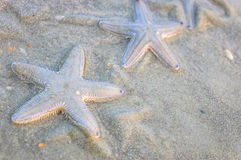 Some starfishes on wet sand Royalty Free Stock Images