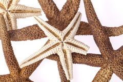 Some starfishes on white background close up. Group of some starfishes on white background close up Stock Photo