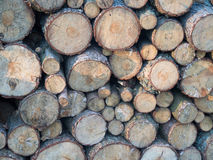 Some stock from the tree that will be firewood. To heat the house Stock Image