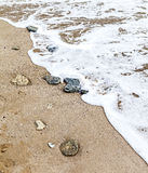 Some stones on the seashore. Some stones on the sand by the seashore royalty free stock photos