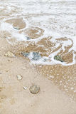 Some stones on the seashore. Some stones on the sand by the seashore stock photo