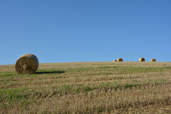 Some  straw bales in horizon on harvested field. Several straw bales in horizon on harvested field with many blue sky Stock Photos