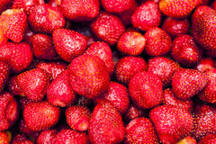 Some strawberries Royalty Free Stock Photography