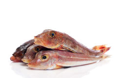 Surmullets fishes Stock Images