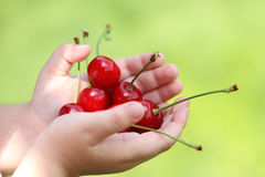 Some sweet cherries in hand of the child. Outdoors stock photography