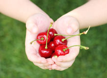 Some sweet cherries in hand of the child. Outdoors Royalty Free Stock Photography