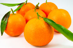 Some sweet tangerines on white. Background stock photos