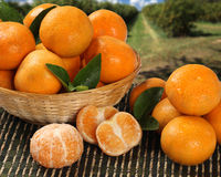 Some tangerines in a basket over a wooden surface Stock Photography