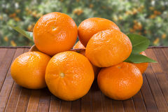 Some tangerines in a basket over a wooden surface Royalty Free Stock Image