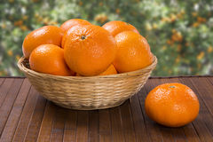 Some tangerines in a basket over a wooden surface. Fresh fruits Royalty Free Stock Photography