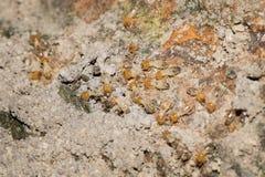 Some Termites. This is a photo some termites, was taken in XiaMen botanical garden, China Stock Image