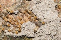 Some Termites. This is a photo some termites, was taken in XiaMen botanical garden, China Royalty Free Stock Photos