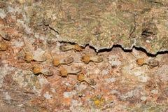 Some Termites. This is a photo some termites, was taken in XiaMen botanical garden, China Stock Photography