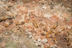 Some Termites. This is a photo some termites, was taken in XiaMen botanical garden, China Royalty Free Stock Images