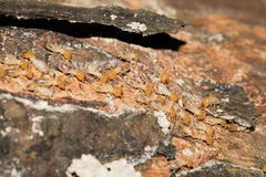 Some Termites Royalty Free Stock Photo