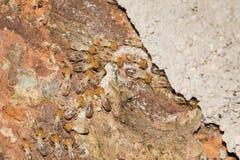 Some Termites. This is a photo some termites, was taken in XiaMen botanical garden, China Royalty Free Stock Image