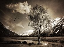 Some Things Never Change. Moody Alaskan landscape with a single birch tree beside a lake processed with textures for a vintage look stock photos