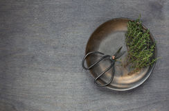 Some thyme with retro scissors. Top view Royalty Free Stock Image