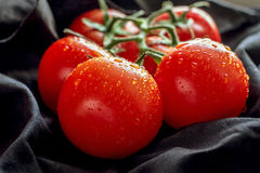 Tomatoes on a dark background. Some tomatoes on a dark background with water drops royalty free stock photography