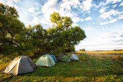 Some tourist tents. Standing under trees on the edge of a field in solar summer morning Royalty Free Stock Photography