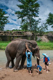 Some traveler feeds the elephant. Chiangmai, Thailand - July 22, 2014:Young some traveler feeds the elephant in the elephant Elephant Nature Reserve Park in stock image