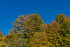 Some trees in autumn with colored leaves. And blue sky in back Royalty Free Stock Photography