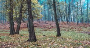 Some trees with autumn leaves in a forest. Some trees with autumn leaves in forest. North Rhine-Westphalia, Germany stock photography