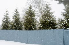 Trees behind the fence with snow. Some trees behind a fence during one snow storm Royalty Free Stock Photography