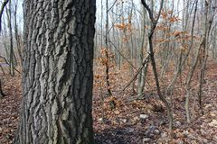 Some trees in a forest. At winter Royalty Free Stock Photography