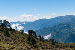 Some Trees at green slope in front of a big blue. Mountain Tajamulco with cloudscape in Guatemala Stock Photo