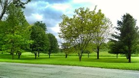 Some Trees In Indiana. The state where nothing happens Stock Image