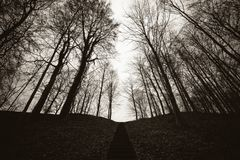 Forest Gaasbeek Lennik royalty free stock image