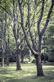 Some trees in a park. Vintage like photo of some trees in a park royalty free stock photos