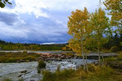 Early autumn at Duck Creek. Birch trees near a stream 2 Stock Photos