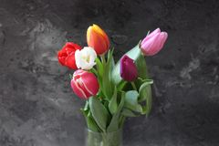 Some beautiful tulips. Some tulips with different colors with marble background Stock Photos