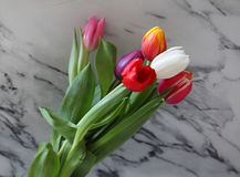 Some beautiful tulips. Some tulips with different colors on marble background Royalty Free Stock Images
