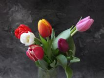 Some beautiful tulips. Some tulips with different colors on marble background Royalty Free Stock Photography