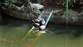 Some turtles in the pond seating on peace of iron. Shot of some turtles in the pond seating on peace of iron stock footage