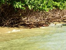 The twigs and the vegetation. Some twigs united with sea water and vegetation in the beach Stock Photography